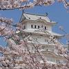 関西でお花見デートするなら!人気のおすすめスポットをご紹介♪