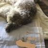 #愛犬ラブ。うんちの思い出・・・。💩