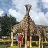 ちびぞう、エンテベ動物園に行く