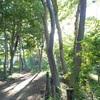 久しぶりの緑地帯