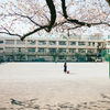 校庭に咲く桜。