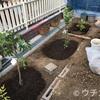 庭に木を植えました