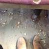 灼熱のエジプシャン専用列車でルクソールからアスワンに戻ります!!