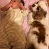 犬と赤ちゃんの共存について 我が家の場合