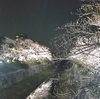 名古屋の桜の名所『山崎川』!夜はライトアップで幻想的に【おすすめスポット】