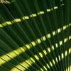棕櫚の葉と影、小鳥の森