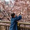 4月6日 パナソニックGH5   Leicaレンズ DG VARI0 ELMARIT 12-60mm 2.8-4.0 ASPH. で神田川の桜!