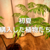 2021年6月。新たに購入した植物をご紹介。ハーブや観葉植物など。リュウビンタイがカッコ良すぎ!