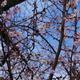冬桜は満開でした(笑)