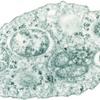 宿主の性を支配する寄生微生物ボルバキア