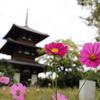 世界遺産 法起寺の中にある秋