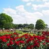 【子連れでお出かけ】埼玉で最大規模のバラ園《伊奈町制施行記念公園》