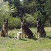 飼い主が犬に「なめられる」のは社会問題さえ引き起こす危険性がある~擬人化された日本の犬たちが招くトラブル~