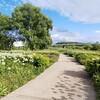 6月の北彩都ガーデン