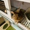ウサギのちまき、耳が冷たくなる