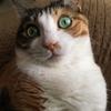 【愛猫日記】毎日アンヌさん#6