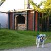 【ペットと遊ぶ】名古屋市西区:ノリタケの森で散歩をしてきた感想