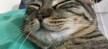 ぐっすり猫