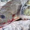 漁港直送のお魚さん ウラバナシ