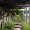 浜名湖ガーデンパーク (浜松)
