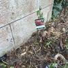 2015/02/02 ドルトムントを地植えするぞ!昨年、バラの家さんからやってきたドルトムント。今日?昨日?のバラの家さんのブログはドルトムント。