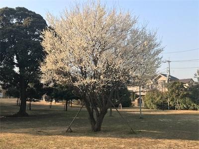 神田川、和田堀公園陸上競技場、夕日が丘ランニング〜ポカポカ陽気〜