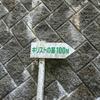 キリストの墓まで600km自走しようとしたけど失敗した話 Part.5