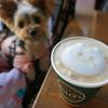 ニャンコのラテアートに感激♡【タリーズコーヒー】テラス犬連れOK💛