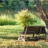 木洩れ陽… 塩沢湖畔に於ける