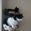 今日の黒猫モモ&白黒猫ナナの動画ー795