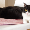 今日の黒猫モモ&白黒猫ナナの動画ー761