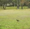 三月に曇久里森で会った鳥