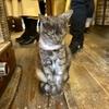 広島県 尾道 「猫の細道」Cafe と 雑貨屋さん、雑貨屋さんでは看板猫さんがマッタリ、尾道プリンで休憩