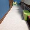 足腰が弱った猫のための部屋づくりは難しい