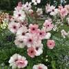 里山ガーデンフェスタで春の花を楽しむ