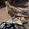 ペット用食器台