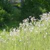 春 野辺の花たち