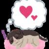 シニア猫には体に合ったベッドを!おすすめのシニア猫用ベッド5選