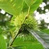 木の実とキノコ4