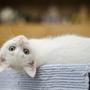 子猫を飼う前夜に思うこと(独り言)
