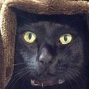 すりよる猫マン
