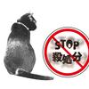 ペットの幸せとは・・・治療費が払えない人間に飼われている動物も幸せである。