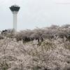 GWは桜を堪能!in函館