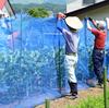 畑の管理と夏野菜の収穫を行いました:飯山市百姓塾7月講座[1]