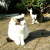 ◆昨日と今日の山猫達