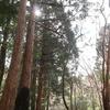 野根山街道<宿屋杉>