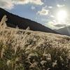 GO TO箱根②:黄金色のすすき草原!秋の仙石原がロマンチック過ぎる♡
