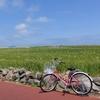 済州島(チェジュ島)島旅 #青麦の揺れる加波島(2)