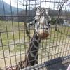 兵庫県で夏休みに動物園とプールが同時に楽しめる施設はココ!