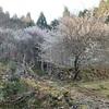 3月23日 霊仙山 朽ちては咲き風に吹かれる コンビニは寄っておけ